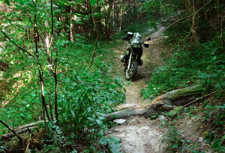 Small fallen tree blocks the way, just begging to be ridden over. Ride over me, it says.