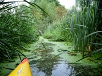Yellow canoe edges into perilous looking reeds