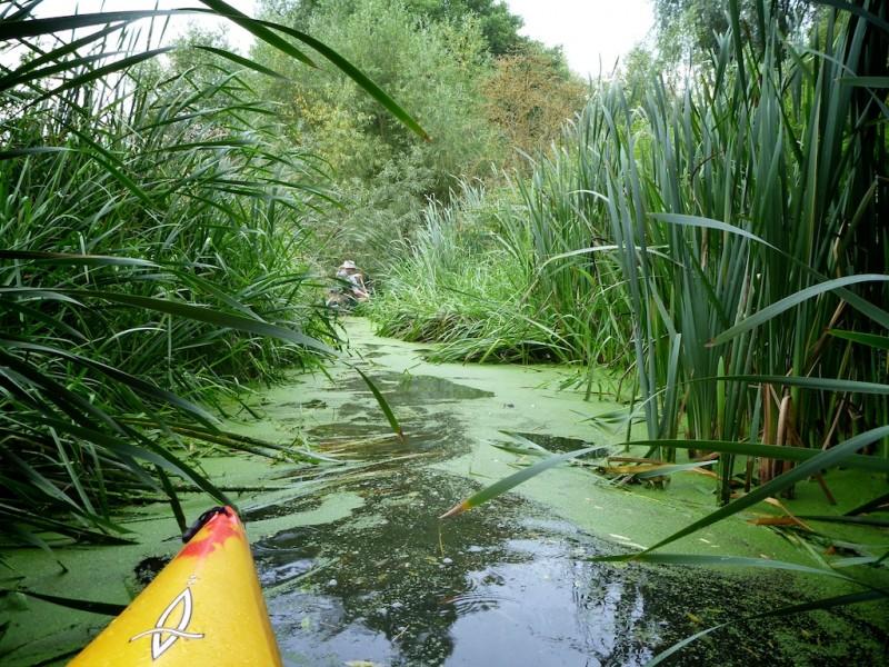Yellow canoe edges into perilous looking reeds