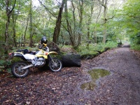 Dual sport Suzuki parked a the side of a wet trail running through an autumnal forest scene