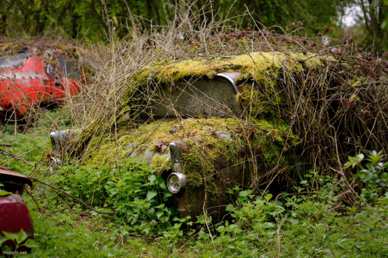 Rusting car covered in moss and brambles