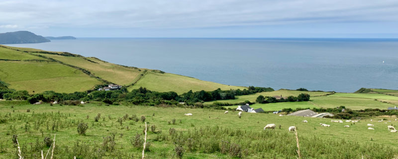 View of the Irish sea and some sheeps