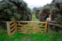 Wooden gateway then footpath downhill between two rows of fern trees