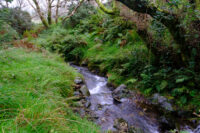 Small flowing stream with steep sides prevents easy access to a footpath that's not marked