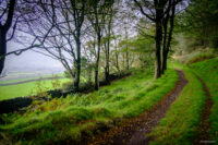 HDR image of a track just inside the edge of mature woodland, green field just visible beyond